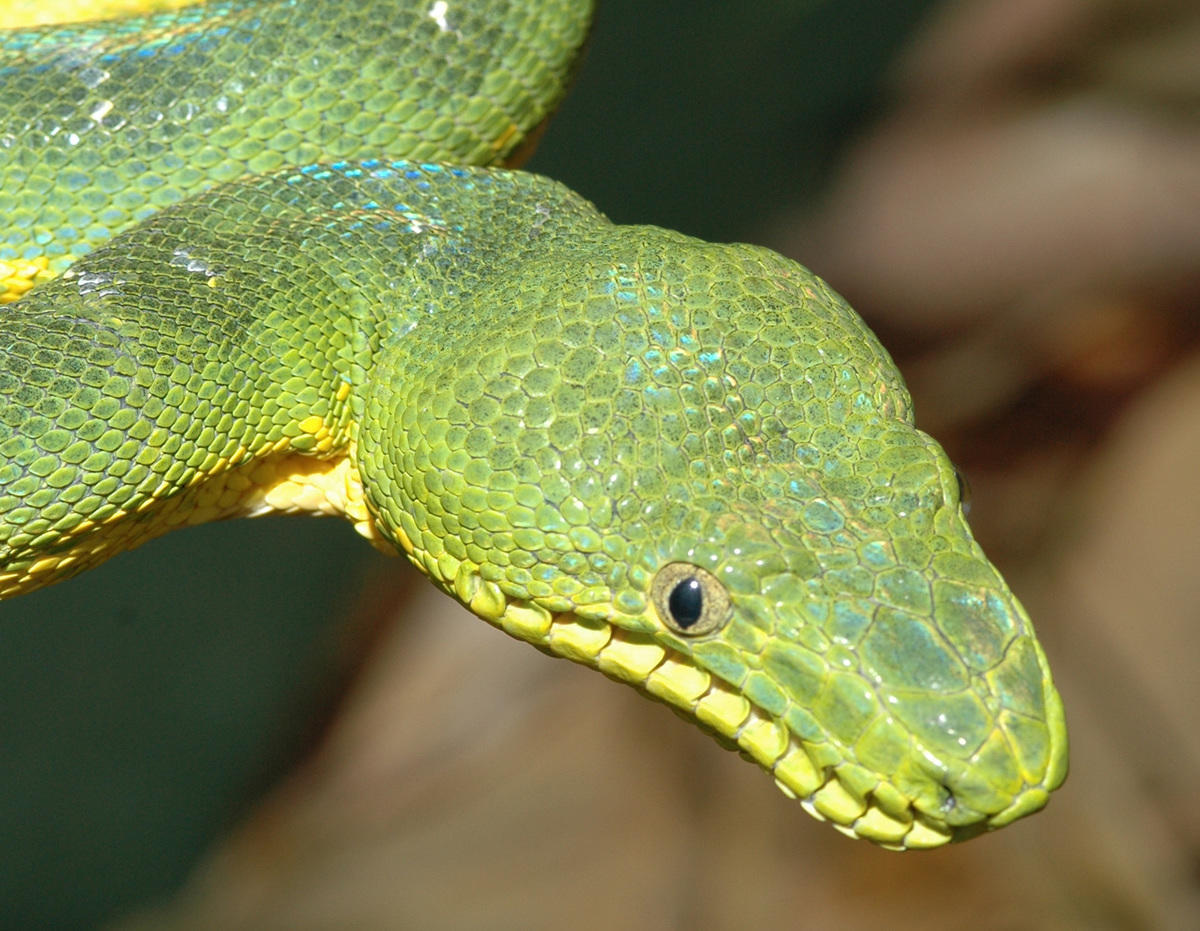 4d7jld64sr dennis demello 0045 green tree python 12 07 04 hr