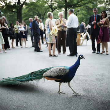 Parties & Events - Bronx Zoo