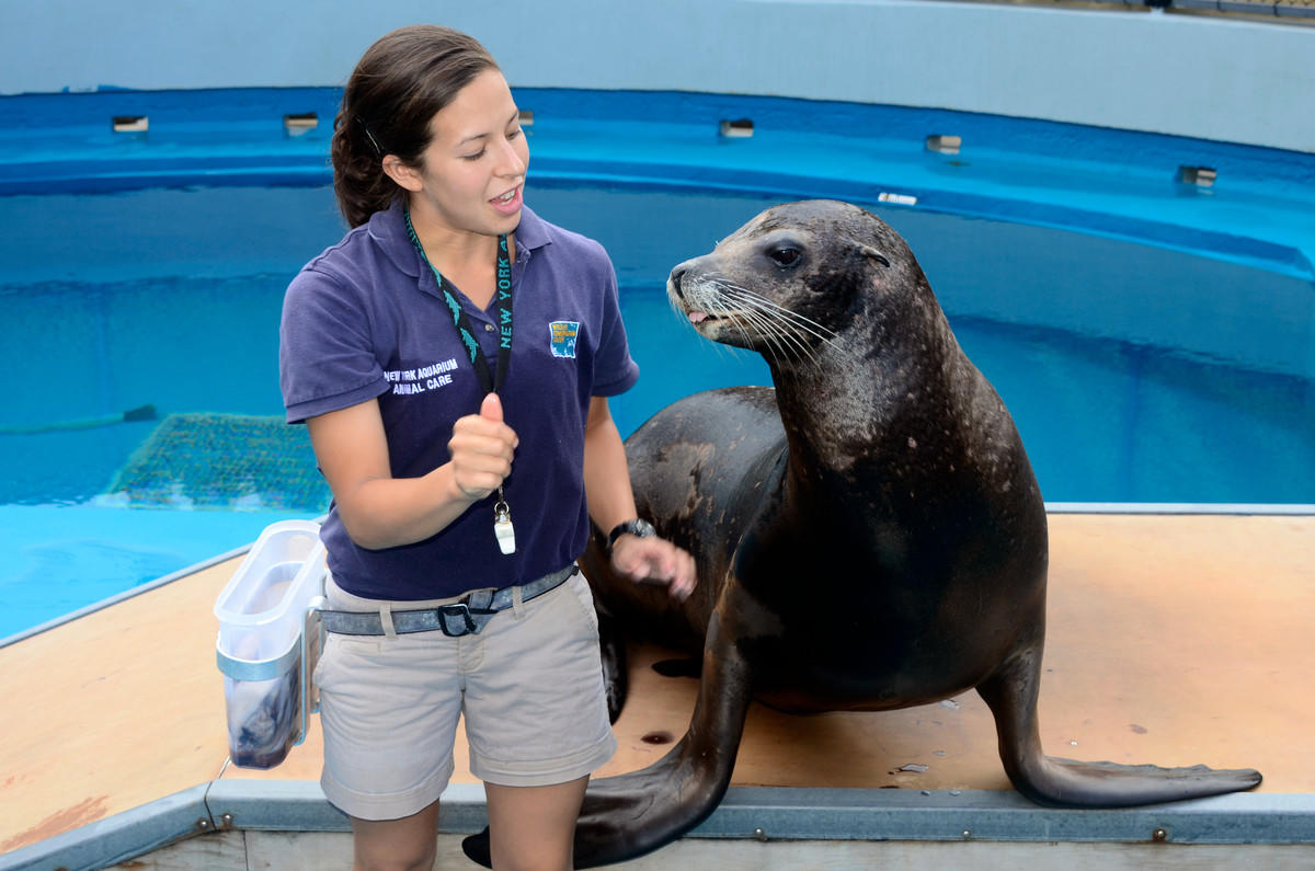 8iqxzlomnd julie larsen maher 0660 california sea lion program ath aq 06 25 11 hr