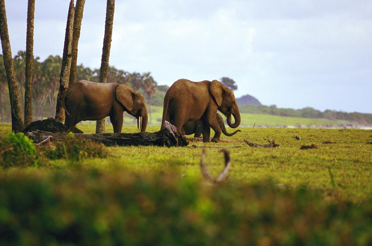 2y5tag1nkj elephants natgeo