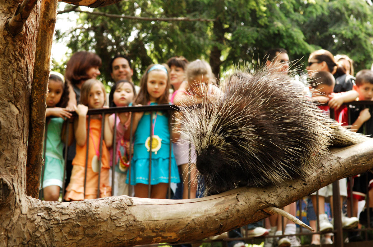 46ijzca3m0 julie larsen maher 2593 children visitors looking at a porcupine qz avi 05 31 06 hr